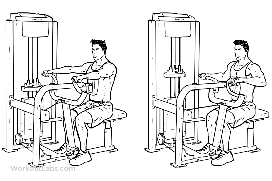 Seated_Machine_Back_Row