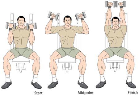arnold-shoulder-press-animation